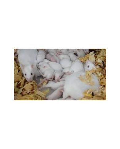 Pienso Granulado Ratas y Ratones Cría 25kg