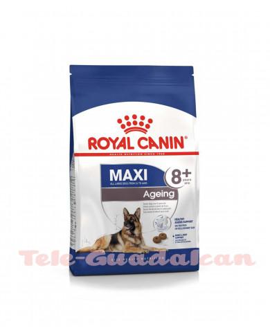 Royal Canin Maxi Ageing +8 3KG